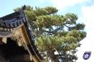 Nijo Castle - 二条城